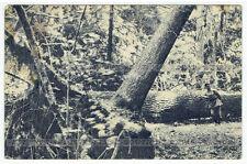 Puszcza Białowieska Dziki zakątek pocztówka (260)