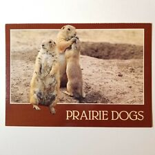 Vintage Prairie Dogs Tempe, Az Postcard New Smith-Southwestern Inc. Unused 4X6