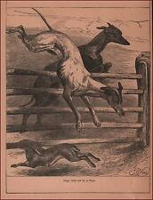 RABBIT Tires Out GREYHOUND DOGS in Chase by Weir, antique engraving 1886