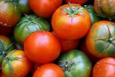 ☺50 graines de tomate ancienne ST PIERRE