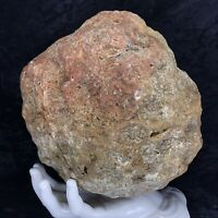 "8"" Large Red Geode Crystal Chalcedony Quartz Unopened Kentucky Lapidary 9.10Lb"