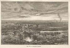 A4920 La Pustza magiara - Xilografia - Stampa Antica del 1895 - Engraving