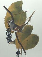 Vintage Audubon Print White Crowned Sparrow Bird 25368
