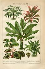 1895 LEAF PLANTS DECIDUOUS PLANTS PALM BANANA Antique Chromolithograph Print