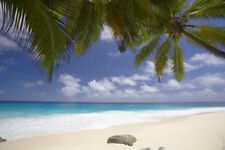 "Seyshells Palm Tree Canvas Pictures 16""X20"" Sand Beach Sea Wall Art Prints"