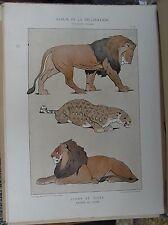 Lithographie Lions et tigre JOUVE Art nouveau - Album de la Décoration - V3