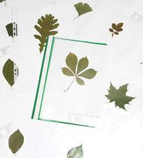 Herbarium - 5 Blätter - Bäume und Sträucher  PROFIQUALITÄT