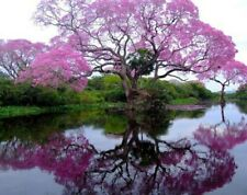 500Pcs Paulownia Tree Seeds Rare 3 Kind Fast Growing Beautiful Garden Forest