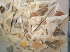10 BUTTERFLIES MOTHS PAPERED UNMOUNTED WINGS CLOSED ASSORTED LOT MIX