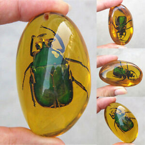 Natural Amber Beetle Fossil Insect Specimen Manual Polishing Pendant Decor Gift