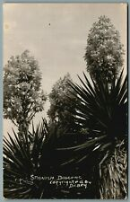 SPANISH DAGGERS RPPC Postcard Copyrighted By Dickey