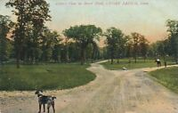 CEDAR RAPIDS IA – Bever Park View showing Dog - 1909