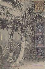 TAHITI INDIGENE CUEILLANT DES COCOS