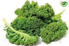 Kale Dwarf Green Curled * Berza (500 semillas) seeds  ** col rizada