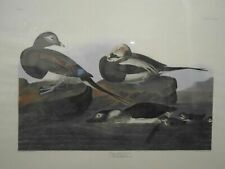 Audubon Amsterdam Edition Long-Tailed Duck Double Elephant Folio 1971