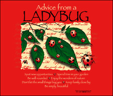 Advice From A Ladybug Small Ladies Cut T-Shirt