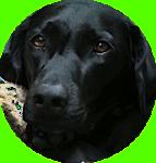 blackdog60