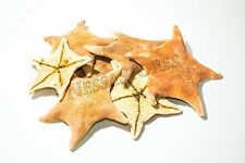 "Bat Starfish Sea Shell Beach Wedding Real Craft 3"" - 4"" (7 Pcs)"