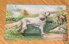 PRE-1920 POODLE DOG POSTCARD ERNIE KIMMEL ROCKWOOD PA