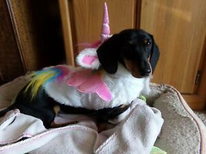 My Little Pony Halloween Costume For SMALL Dog Unicorn w WINGS