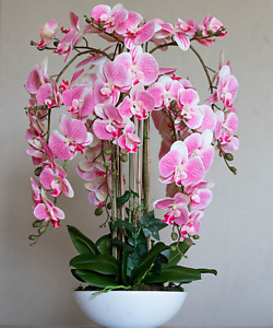 Beautiful  real touch pink orchid arrangement in white vase💕