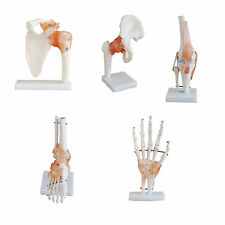 Anatomical Joint Models with Ligaments - 5 Model Offer
