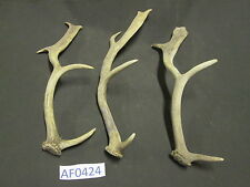 3 Fallow Deer Antlers Decor Wildlife Hunting in Texas Wildlife Ranch AF0424
