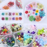 Nail Art Dry Flowers Floral Decoration in Box Nails Accessories  Tool