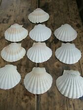10 Number Scallop Shells - Croque St Jaques/Cooking/Crafts/Decoration