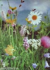 LORD Blumen-Wiese 1 kg Wildblumen Kräuter Kräuterwiese Blumen Wiese Bienenweide
