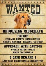 """Rhodesian Ridgeback Wanted Poster Fridge Dog Magnet Large 3.5"""" X 5"""""""