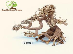 Bonsai Driftwood Tree Decoration For Freshwater Aquariums Shrimp Fish - BDV80