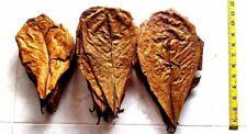 20 pcs Dried Catappa Ketapang Indian Almond Leaves 3-8 inches