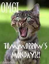 Funny Cat Humor Tomorrow's Monday Refrigerator / Tool Box Magnet
