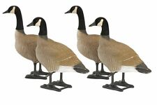 BigFoot Bull Canada Goose Decoy - Pack of 4