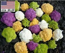 50+ Rainbow Blend Cauliflower * Broccoli * Mixed Colors* Seeds * Healthful* Usa