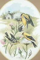 Patrick J. Costello 1980 Signed Framed Goldfinch Print Excellent Condition #312