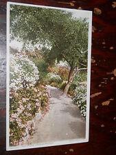LOS ANGELES CA - PARK SCENE EARLY UNUSED POSTCARD - Detroit Publishing Co. 12730