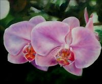 Quality Hand Painted Oil Painting Two Lavender Orchids 20x24in