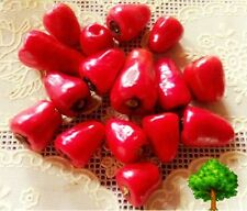 *UNCLE CHAN* 30 SEED MINI CHERRY RED PEPPER CUTE SWEET FOR SALAD ORGANIC
