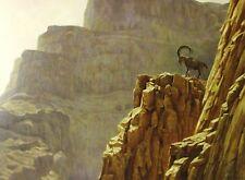 Robert Bateman Art Print Alpine Ibex at Masada 1998 Ram Steinbock Bouquetin Goat