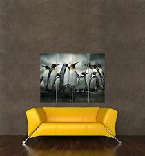 POSTER PRINT GIANT PHOTO NATURE EMPEROR PENGUIN HUDDLE BIRDS ANTARCTICA PAMP123