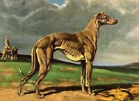 Greyhound - Dog Art Print - Megargee MATTED