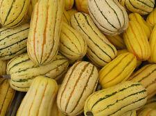 50 DELICATA SQUASH Striped Sweet Potato Cucurbita Pepo Vegetable Seeds *Comb S/H