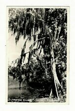 RPPC Suwannee River, Florida, Mossy Trees 1950s Postcard