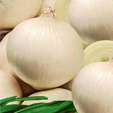 Seeds Onion White Queen Giant Vegetable Organic Heirloom Russian Ukraine