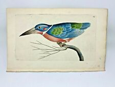 Kingfisher - 1783 RARE SHAW & NODDER Hand Colored Copper Engraving