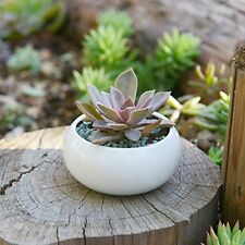 Mini White Ceramic Succulent Plant Planter Pot for Cactus Small Plant