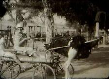 16mm Home Movie ~ 1926 Pasadena, CA (Busch Gardens & Cawston Ostrich Farm)