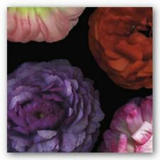 Ranunculus I Left Pip Bloomfield Art Print 18x18